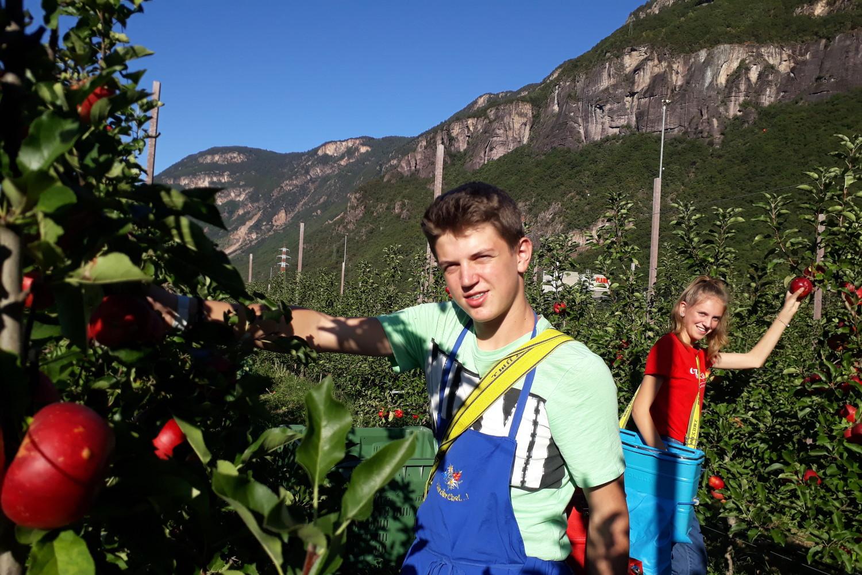 Ladwirtschafltiche Fachoberschule Auer Apfelernte