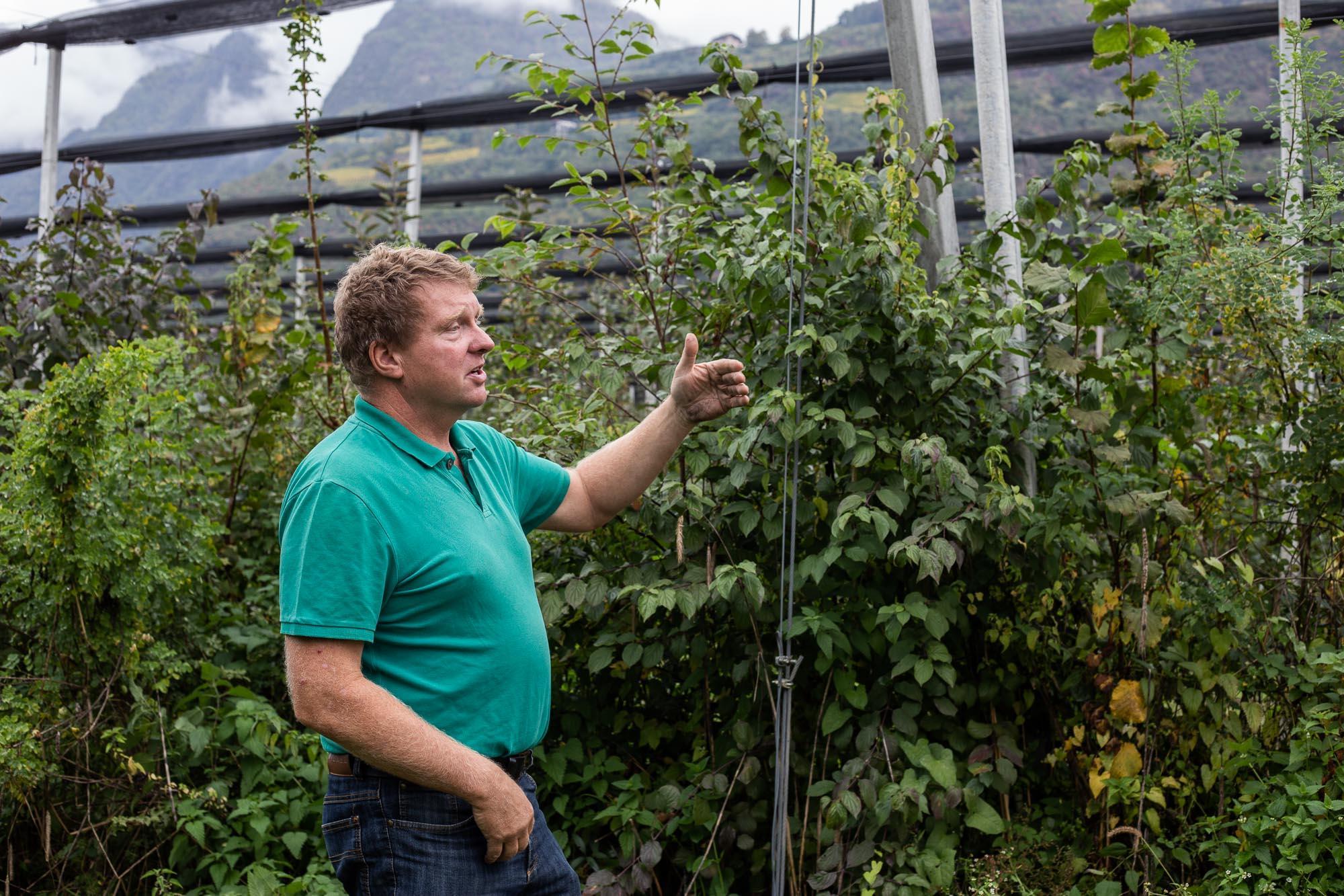 Thomas Hafner organic apple farmer southtyrol italy